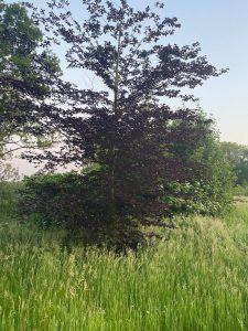 Natuur = onbevangen je eigen liedje zingen